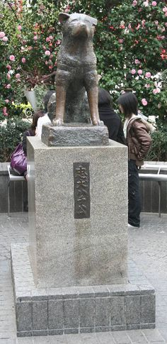 Not a shiba inu but an Akita, a related Japanese breed.Shibuya Train Station in Japan - Statue of Hachi an Akita who went to the train station every day for 10 years after his owner died. Hachiko Statue Shibuya, Hachiko Dog, Hachi A Dogs Tale, Shibuya Tokyo, Tokyo Japan, A Dog's Tale, Japanese Akita, Loyalty, Animals