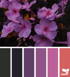 today's inspiration image for { color garden } is by . thank you, Georgie, for another incredible image share! Colour Pallette, Colour Schemes, Color Combos, Design Seeds, Color Magic, Garden Images, Colour Board, Color Stories, Color Theory
