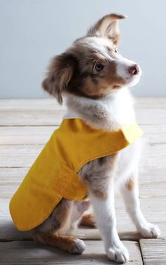 adorable dog rain jacket http://rstyle.me/n/s89xapdpe