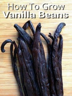 To Grow Vanilla Beans – for making homemade vanilla extract & more… How To Grow Vanilla Beans - for making homemade vanilla extract & more. How To Grow Vanilla Beans - for making homemade vanilla extract & more. Indoor Vegetable Gardening, Organic Gardening Tips, Container Gardening, Gardening Vegetables, Flower Gardening, Veggie Gardens, Herb Gardening, Gardening Books, Hydroponic Gardening