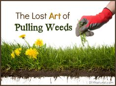Knowing how to weed properly is a skill few folks possess anymore. Overuse of weed and feed products has stolen the time-honored skill, so let's relearn it!