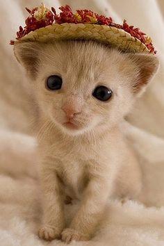 Little kitten wearing a little hat!