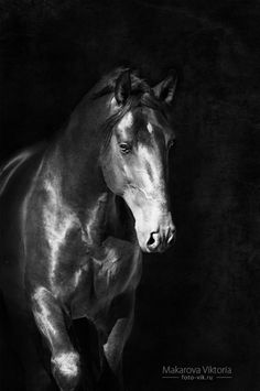 images of horses in black and white - photo #24