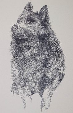 Dog art drawn entirely from the word Schipperke. See all the 110 breeds at: drawDOGS.com Artist Kline can add your dogs name into the art.