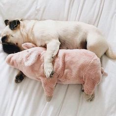 Everyone needs a cuddle buddy! 🐶🐾 www.hideaway.online #hideaway #hideawayonline #soaps #soaplovers #relax #bath #fizz #soapshare #love #handmadesoap #afterpayaustralia##pinterest#loveyourbody #picoftheday #soaplife #soak #float #giftgiving#happiness #laughter #bathtime #sweets #pinterest#smile #love #instagood #amazing #puppylife🐾 #bestoftheday #whippedsoap