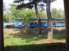 海浜公園内の電車