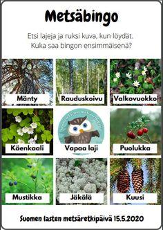 Materiaalit – Suomen lasten metsäretkipäivä Primary Education, Special Education, Finnish Language, Closer To Nature, Teaching Kindergarten, Science And Nature, Bingo, Finland, Garden Sculpture