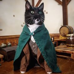 Amazing Halloween Costumes, Cute Costumes, Scary Dogs, Cat Cosplay, Great Stories, Kittens Cutest, Animal Pictures, Cute Puppies, Cute Animals