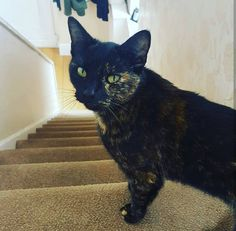 Missing cat from the Tollemache Road, Birkenhead area. She is microchipped and responds to Lily, Ninny & Pussy Puss. She will likely be found in the Claughton area of Tollemache Road / Flaybrick Cemetery.