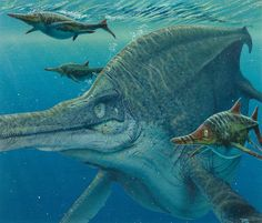 "Always hate to come across these guys! ""Ichthyosaurs: Shonisaurus accompanied by pack of Californosaurus"" ~ Californosaurus (meaning ""California lizard""): an extinct marine reptile (ok, ok ). It was 10 ft (3 m) long. It had 4 paddle-shaped flippers & sharp teeth in long, pointed jaws (looking a bit like a dolphin). They lived during the late Triassic period in seas that covered what is now California. It fed on fish & other small marine creatures."