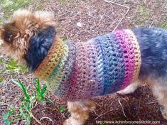 Knitting Patterns For Dogs, Crochet Dog Sweater Free Pattern, Dog Sweater Pattern, Dog Pattern, Free Crochet, Crochet Patterns, Dog Crochet, Crochet Sweaters, Sweater Patterns