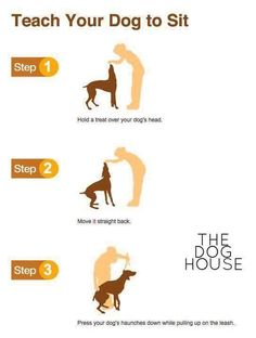 Dog Obedience Training: Teach your dog to sit: – Sam ma Dog Training Puppy Training Tips, Training Your Dog, Potty Training, Training Collar, Army Training, Obedience Training For Dogs, Clicker Training Puppy, Agility Training, Training Classes