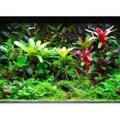 Vivarium, Close Up, Indoor House Plants, Terrarium