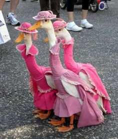 Here are some ducks In pink dresses...