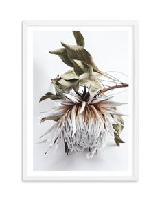 King Protea I is an original artwork photographed and designed by Teigan McCleary for Olive et Oriel. This beauty can be hung portrait or landscape.<br />Add a modern touch to your home with this beautiful protea, an incredible flower with neutral tones o Framed Artwork, Wall Art Prints, Poster Prints, Art Posters, Buy Prints Online, King Protea, Peony Print, Oversized Wall Art, Plant Art