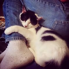 Also, cat cuddles are the best cuddles. | 21 Reasons To Be Thankful For Your Cat