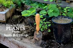 How To Grow Plants From Seeds and Cuttings