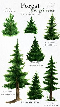 Watercolor Trees, Watercolor Landscape, Watercolor Paintings, Landscape Clipart, Coniferous Trees, Pine Tree Art, Tree Clipart, Nature Collection, Landscape Background