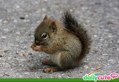 Baby squirrel<3