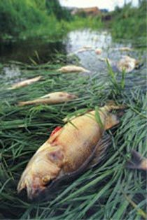 China river with fish