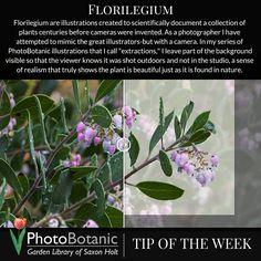 #Photography #TipoftheWeek | Full post at: http://photobotanic.com/photo-florilegium | #photographytips #phototips #gardenphotography