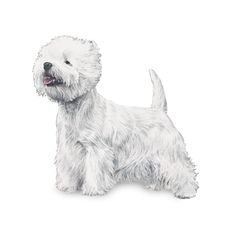 West Highland White Terrier   WOOFipedia by The American Kennel Club