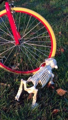 Bad Gnarly! Bones, Bicycle, Fun, Bike, Bicycle Kick, Bicycles, Dice, Legs, Hilarious