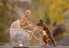 Here's How Squirrels Celebrate Halloween  What an amazing theme / process / photo collection!