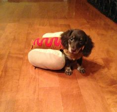 Weiner dogs were basically made for hotdog costumes