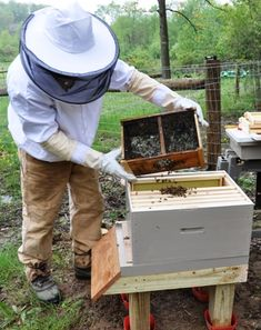 Describes and shows pictorially the process for starting honeybees in a new hive.