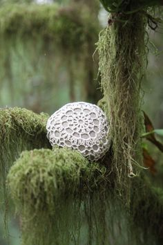 My favorite Crocheted Rock picture...  it was my friend Terri who suggested we put the rocks in the moss covered trees... the photos turned out so beautiful due to her photography talents...