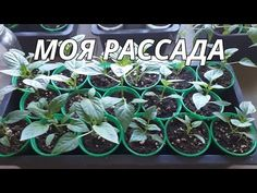 Plants, Youtube, Flora, Plant, Youtubers, Youtube Movies