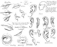 Sketching Lips, Mouth and Ear from How to Draw Nearly Everything: Dover Pub. Weekly Samples