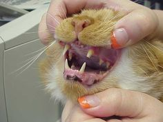 Exclusively Cats Blog: February is National Pet Dental Health Month!