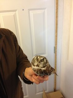 This baby owl hit our window. Gave us this look the whole time - Imgur  YOUR FORCEFIELD DISPLEASES ME  AS DOES YOUR INTERIOR DECORATING