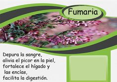 Fumaria # عرق شاه تره Barcelona, Products, Barcelona Spain