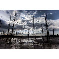 """Essenziale Reportage naturalistico lungo il """"#West"""". Terra di frontiera, territorio unico per catturare scenografie naturali da lasciare senza fiato. Non vi è alcun altro paesaggio del pianeta capace di competere in bellezza, in immensità degli spazi e profondità del cielo. U.S.A., #Wyoming, #Yellowstone National Park 03/08/2014"""