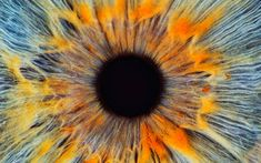 Darwin was baffled by it; Christians see it as evidence of the divine. Will science ever unlock the secrets of the human eye?