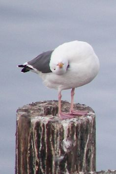 Seagull looking upside down