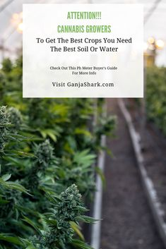 Knowing the proper PH levels is the key to either a failed, mediocre, or excellent harvest. Read this article to find out why soil PH is so important. Marijuana Plants, Cannabis Plant, Indoor Hydroponic Gardening, Ph Chart, Growing Weed Indoors, Best Led Grow Lights, Ph Meter, Ph Levels, Soil Ph