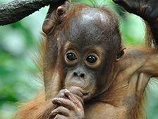 Borneo Adventure Tours