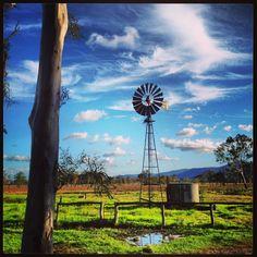 An Australian farm, windmills and gum, green grass and wooden fence - From the Verandah: 1800 Swamp
