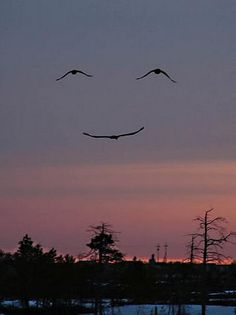 this is an unedited photo of birds flying. no joke.