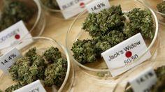 Is Marijuana Chewing Gum The Next Big Thing? - Fox Business