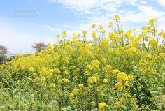 春の黄色|Enjoy the Little Things