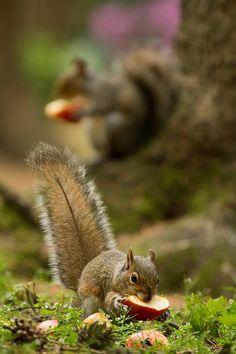 Secert Squirrel | Flickr - Photo Sharing! (I just love squirrels! slm)