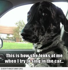 funny dog picture how my dog looks at me when i sing in the car