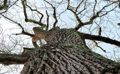 Deadly Tree Disease Spreads, Scientists Work on Genes to Save Them - Ash Trees in UK