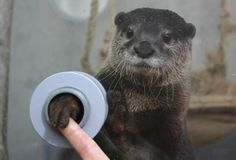 :) FYI, there is an aquarium where you can shake hands with otters. #funny #silly #humor - Check out loads of funny viral images.