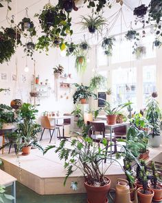 Green paradise at @wildernisamsterdam  #wildernis #urbanjunglebloggers…